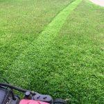 Lawn mowing services north shore Sydney