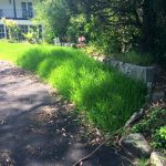 One-Off Lawn mowing – Killara